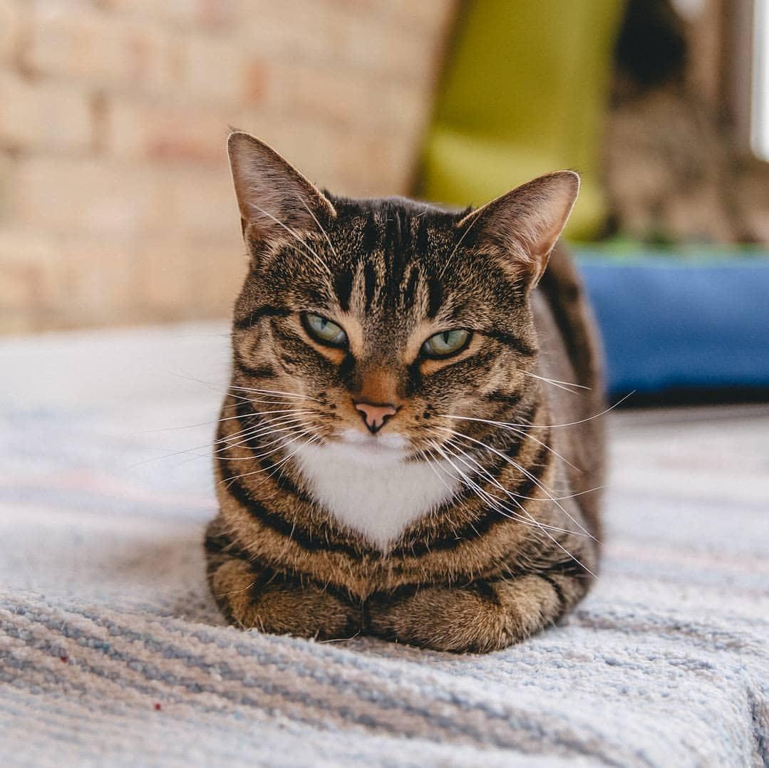 Photo courtesy of Happy Cat Cafe.