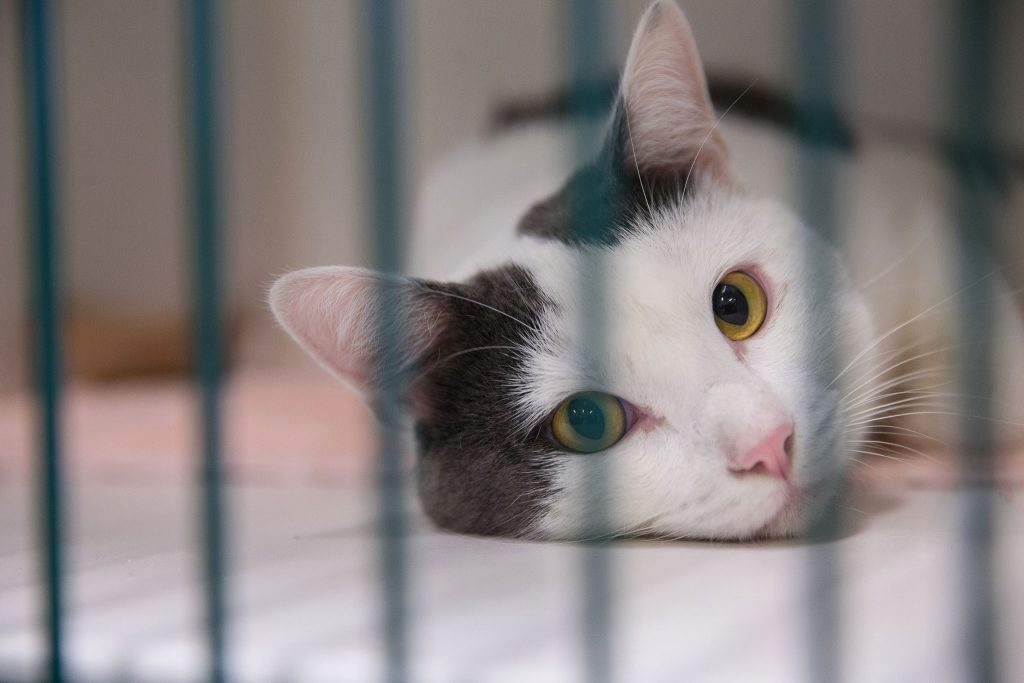 Bissell Pet Foundation hosts Empty the Shelters this weekend. Photos courtesy of Bissell Pet Foundation