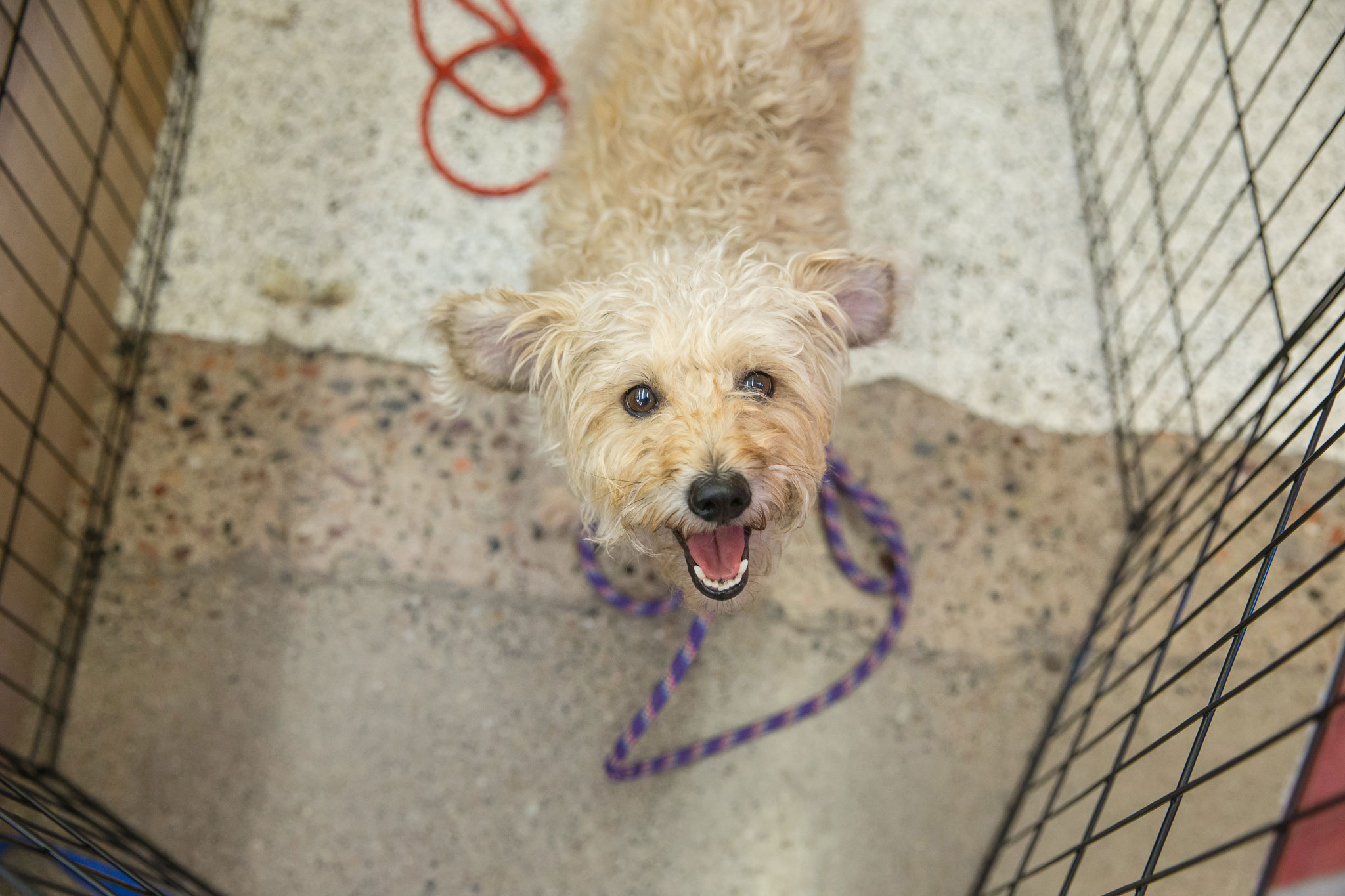 Bissell Pet Foundation hosts Empty the Shelters