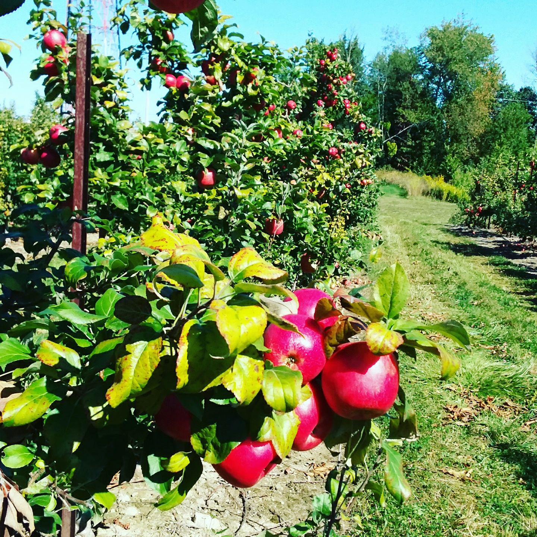 Sietsema Orchards