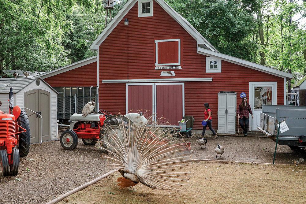 Wildlife Rehab Center