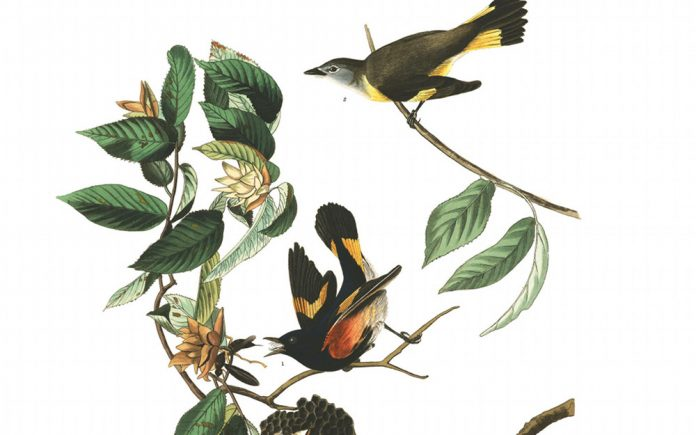 John James Audubon exhibit Calvin University